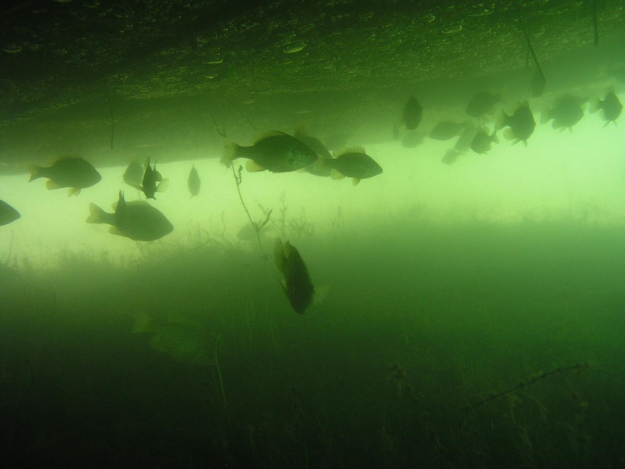 569-plongée roucarié